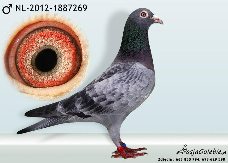 NL-2012-1887269