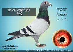 PL-11-337125