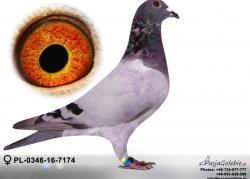 pl-0346-16-7174