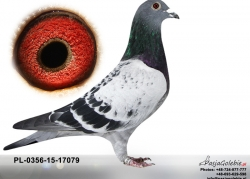 pl-0356-15-17079