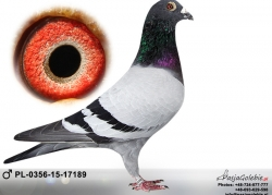 pl-0356-15-17189
